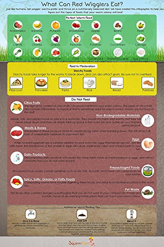 what-can-red-wigglers-eat-13x19-infographic-poster-for-live-red-wiggler-worm-composting-bins-an-esse