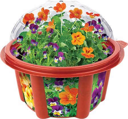 Dunecraft Edible Flowers Garden Science Kit