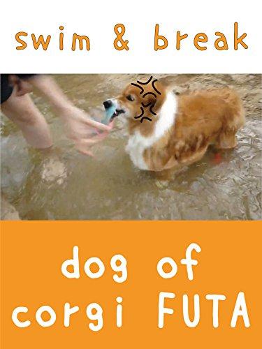 dog of corgi FUTA - swim & break