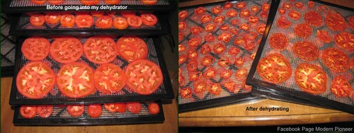 My Excalibur Food Dehydrator Makes A Loud Noise