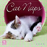 Cat Naps 2009 Calendar 子猫