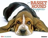 Just Basset Hound Puppies Calendar