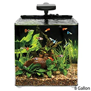 Aqueon aqe17102 evolve desk top aquariums for Aqueon fish tank