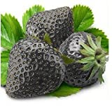 SD0553 Black Strawberry Fruit Seeds, New Live Fresh Seeds (10 Seeds)