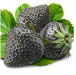 SD0553 Black Strawberry Fruit Seeds,...