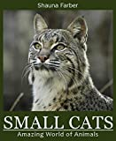 Small Cats (Amazing World of Animals Book 8)