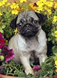 Just Pugs Jigsaw Puzzle