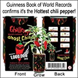 Nature's Greeting Scorpion Pepper Magic Plant