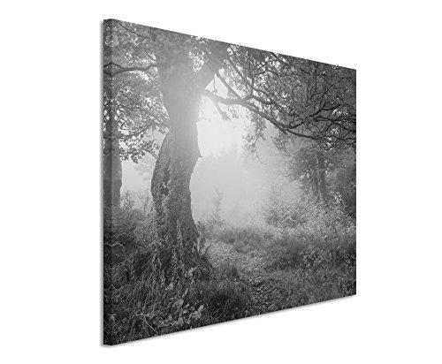 50x70cm Leinwandbild schwarz weiß in Topqualität Herbst Bäume Sonnenlicht Herbstblätte Retro-Stil-Filter Ukraine Karpaten Europa