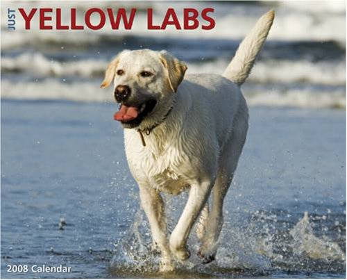 Pictures Of Yellow Labs. Buy Just Yellow Labs 2008 Wall