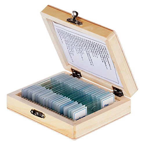 AmScope-PS25-Prepared-Microscope-Slide-Set-for-Basic-Biological-Science-Education-25-Slides-Includes-Fitted-Wooden-Case