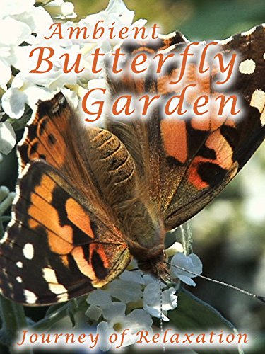 Ambient Butterfly Garden