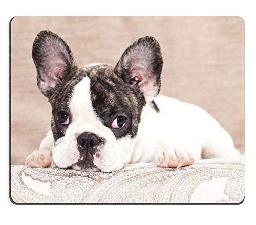 MSD Natural Rubber Gaming Mousepad IMAGE ID: 11412244 french bulldog puppy 3 months (French Bulldog Puppies Calendar compare prices)