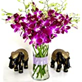 Fresh Flowers - Purple Dendrobium Orchids with Vase ~ Just Orchids