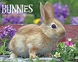 Just Bunnies 2015 Wall Calendar
