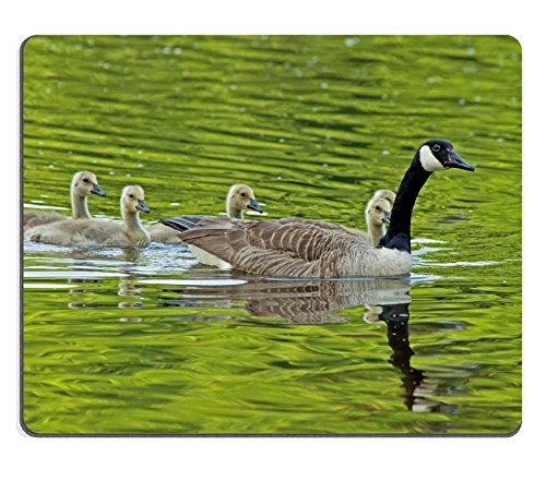 Qzone Mousepads Canada Goose mother swimming with her young IMAGE 32596159 Customized Art Desktop Laptop Gaming mouse Pad