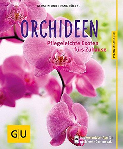orchideen-pflegeleichte-exoten-furs-zuhause