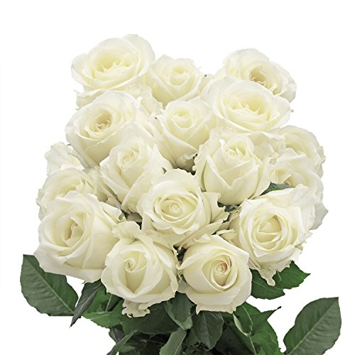 50 Fresh Cut White Roses | Fresh Flowers Express Delivery | Perfect Gift for Birthday, Anniversary, Love or any occasion.