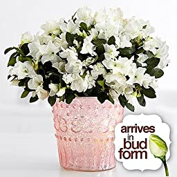 Window Box - Eshopclub Online Fresh Flowers Plants - Anniversary Flowers - Wedding Flowers Bouquets - Birthday Flowers - Send Flowers