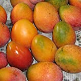 宮古島産完熟アップルマンゴー 2kg 訳あり(4~6玉) ランキングお取り寄せ