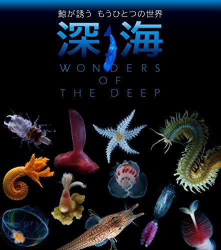 深海 鯨が誘うもうひとつの世界