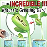 "The Incredible Nature's Greeting Bean Plant that sprouts with the message of ""Happy New Year"" Engraved on the beautiful plant's central bean!!! Open...Water... Watch Your Greeting Grow!!! Powered by the Patent Magic Plant Company"