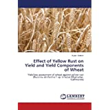 Effect of Yellow Rust on Yield and Yield Components of Wheat: Yield loss assessment of wheat against yellow rust...