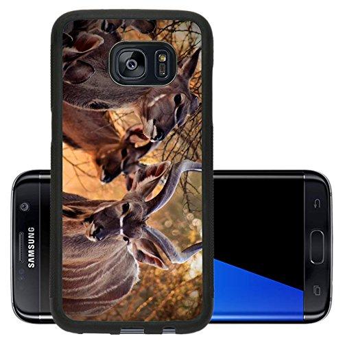 Liili Premium Samsung Galaxy S7 Edge Aluminum Snap Case Kudu Family Bull and Ewe in Bushveld Under Thorn Tree IMAGE ID 15012792 (Kudu Edge compare prices)
