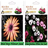 Alkarty Mid Day And Dimorphotheca White Star Flower Seeds Pack Of 20 (Winter)