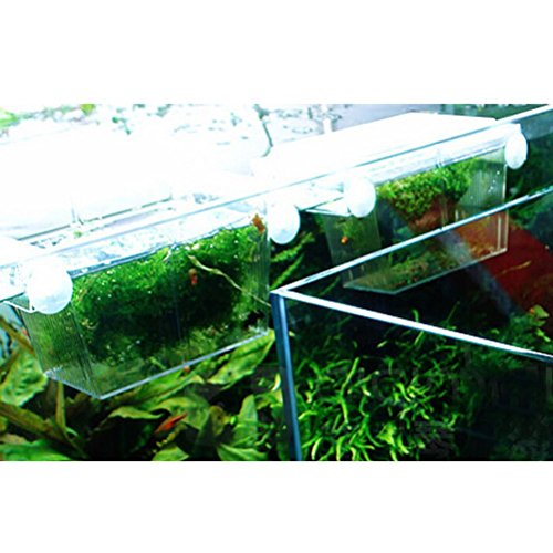 Vorcool fish breeding box aquarium self floating fish for Fish breeding tank