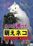 ネコが撮った『萌えネコ』写真ニャン画:子ネコ編 ?: はい!目線ちょーだい (22ART PUBLISHING)