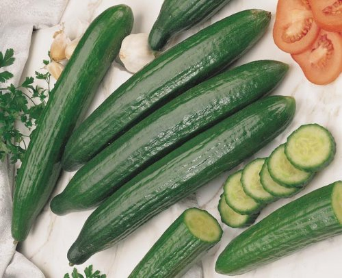 Cucumber Burpless 25 Seeds Early Spring Burpless by Seeds and Things