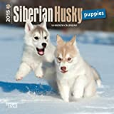 Siberian Husky Puppies 2015 Calendar