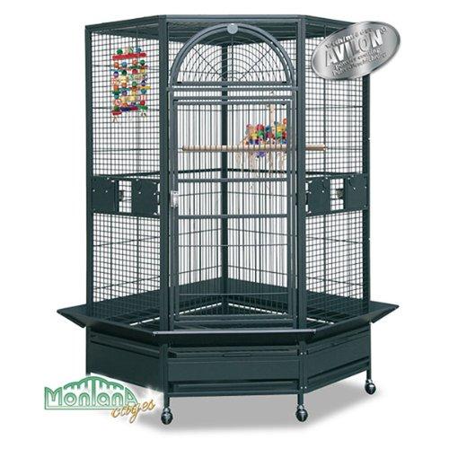 la cage de mes rêves 515wnusT2AL