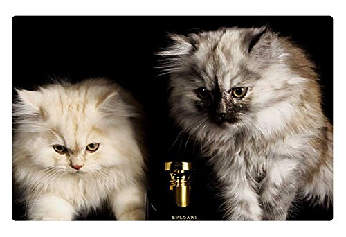 irocket-indoor-floor-rug-mat-bulgari-baby-kittens-236-x-157-inches