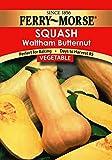Ferry-Morse 1384 Squash Seeds, Butternut (3.7 Gram Packet)