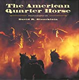 img - for American Quarter Horse book / textbook / text book