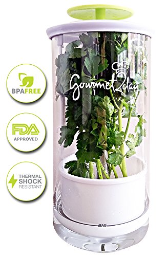 glass-herb-keeper-anti-leakage-fresh-herb-container-free-paleo-recipe-ebook-herb-storage-holder-keep
