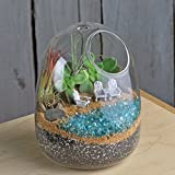 Glass Terrarium - Planters Decoration Wall Hanging Vases Footed Candle Terrariums Decor Indoor Outdoor Patio Garden - Contents Pictured Not Included, Glass Only (Dome - Large (6