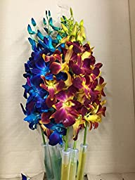 Blue Dyed Dendrobium with Yellow Dyed Dendrobium Orchid