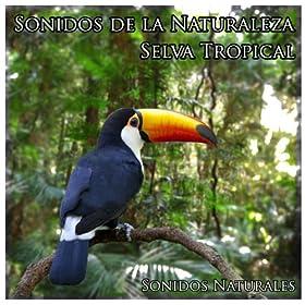 Sonidos de la Naturaleza: Selva Tropical: Sonidos