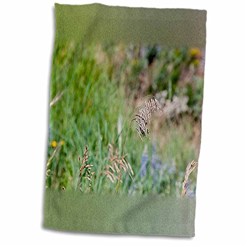 Jos Fauxtographee Realistic - A Weed Floating in the Wind on a Grassy Weed Backdrop with Spots of Blue and Yellow - 11x17 Towel (twl_47445_1)