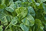 Fresh Market Spinach - 52