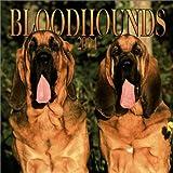 Bloodhounds 2004 Calendar