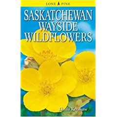 Saskatchewan Wayside Wildflowers