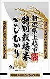 【精米】新潟県上越市産 特別栽培米白米 こしひかり 5kg 平成25年産