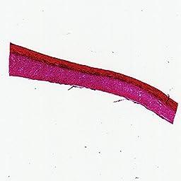 Mammal Tendon Slide, l.s., 7 m, H&E