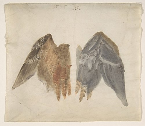 Bittern'S Wings: Study Showing Both Sides Poster Print By In The Manner Of Albrecht Dürer (18 X 24)