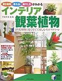 インテリア観葉植物—置き場所・手入れ・殖やし方がわかる (実用BEST BOOKS)