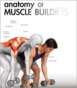 anatomy of muscle building book pdf